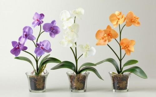 Орхидеи в стеклянных горшках
