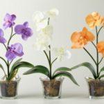 Как правильно ухаживать за орхидеями в горшке в домашних условиях