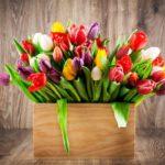 Выращивание тюльпанов в домашних условиях