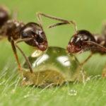 ТОП-3 способов, как избавиться от муравьев на участке: без химии, народными средствами и химией