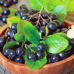 Черная рябина (арония): польза и вред, противопоказания, применение
