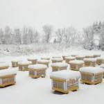 Особенности и обеспечение безопасной зимовки пчел