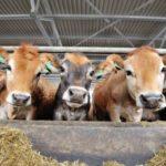 Бизнес-план молочной фермы с расчетами